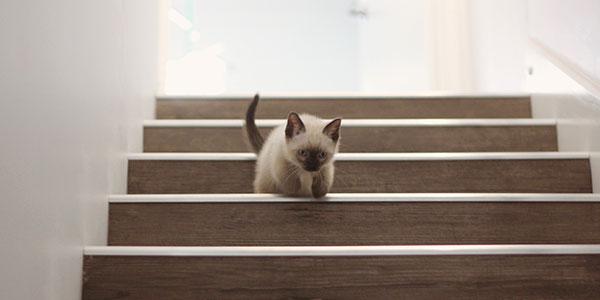 テラスハウス物件は、一戸建てより階段が急で狭い